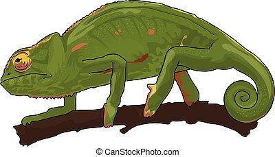 Chameleon - The green chameleon  on a brown branch.