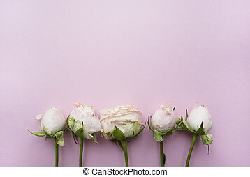 Bouquet of roses on a pink background with place for your text.