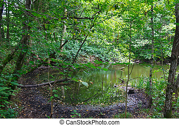 Small amazing lake among southern forests - Small amazing...