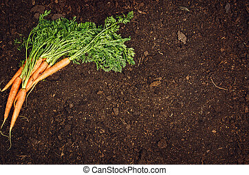 Raw natural vegetables food. Carrots top view natural soil background