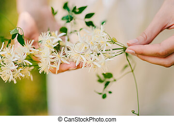 Wedding rings on the flowers of jasmine in the hands of the...