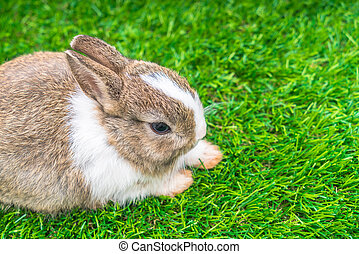 Rabbit on green grass for easter holiday