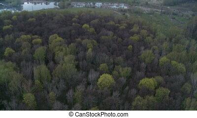 Forest landscape aerial shot. - Landscape with leafless...