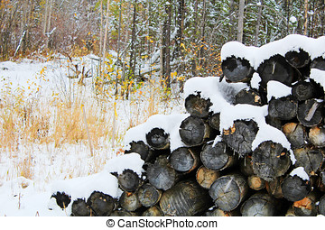 Pile of snow covered logs in the forest.