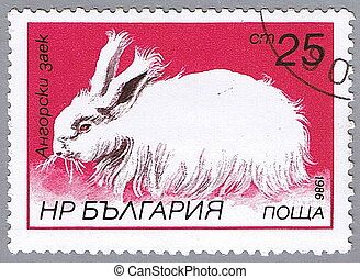 Angora rabbit - BULGARIA - CIRCA 1986: A stamp printed in...