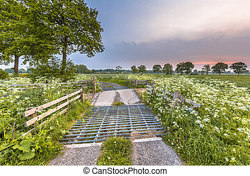 Cattle grid decorated with Cow Parsley flower - Cattle grid...