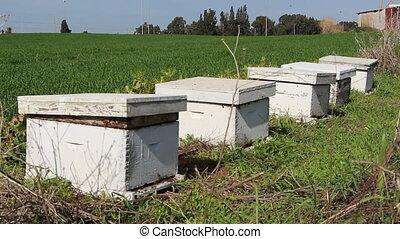 hives - Shot of hives