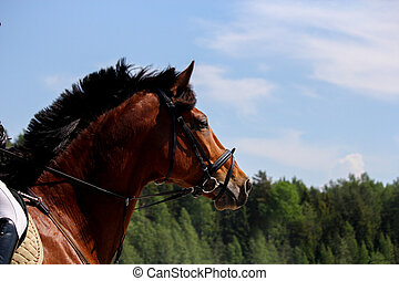 Close up of brown horse with bridle on sky background