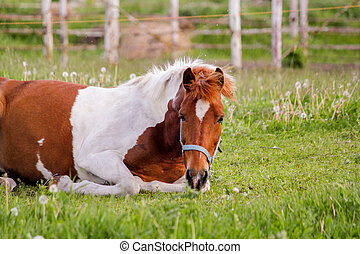 Portrait of beautiful horse lying down on the ground -...