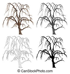 Old tree willow vector.eps - Old tree willow color black and...
