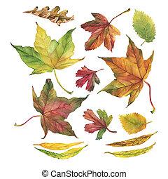 otoño, Conjunto, hojas