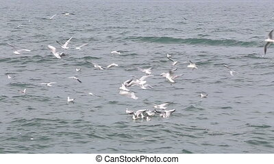 Gulls on the water - Shot of Gulls on the water