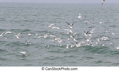 Gulls on the water of the ocean - Shot of Gulls on the water...