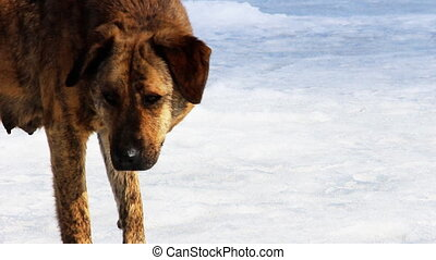 Wild dog standing on the snow hd