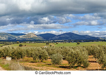 landscape in province of Albacete, Spain - Landscape with...