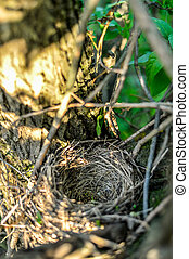 Close up empty birds nest in the tree