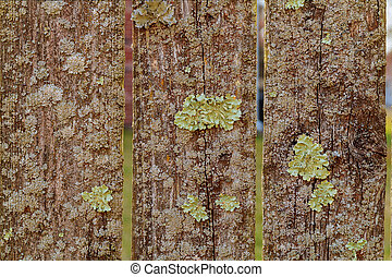 Old grunge wooden wall planks background Part of an old...