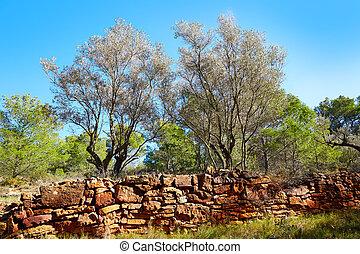 Sierra Calderona mountains in Valencia pine forest of Spain