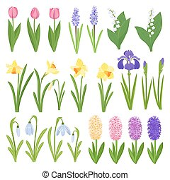 Spring flowers. Irises, lilies of valley, tulips,...