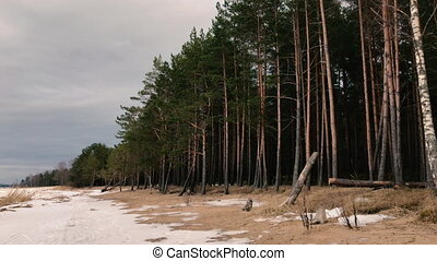 Camera moves and takes pictures of a landscape of trees on a...