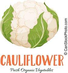 Vector cauliflower vegetable - Vector cauliflower ....