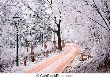 Rime covered trees and footpath in a city park