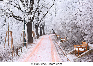 Long alley with benches and trees covered in rime