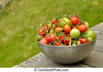 Fresh Tomatoes - Fresh tomatoes from the garden in Karlstad,...