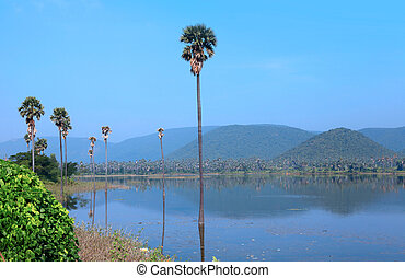 Palm trees in the middle of Mudasarlova reservoir in...