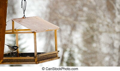Bird feeder in the park
