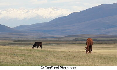 Horses 12 - The Mountain pasture.