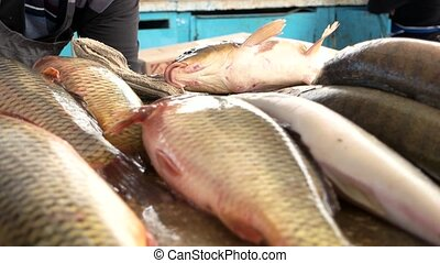 Delicious fresh fish. - Fresh carp are sold on the market....