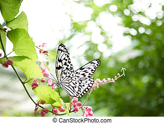 tropical butterfly landed on a creeper plant