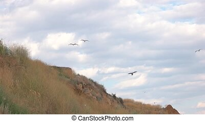 Birds flying over hill. Ground and cloudy sky. Ease and...