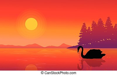 Silhouette of swan on lake nature scenery