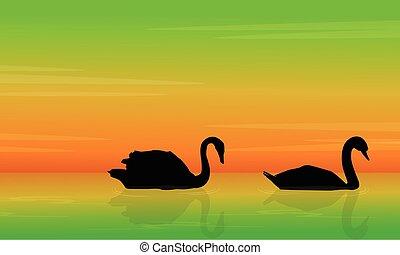 Silhouette of swan beauty landscape