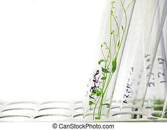 arabidopsis plants in the glass tube