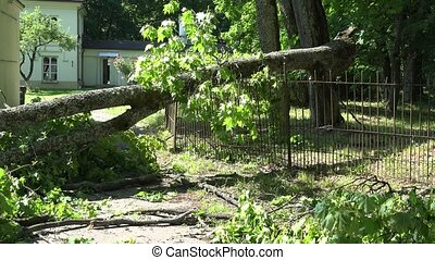 Heavy tree branch fallen on fence and entrance to...