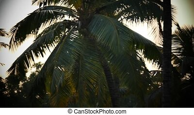 Palm tree and sky sunset Kerala India - Yoga tour by Yantra...