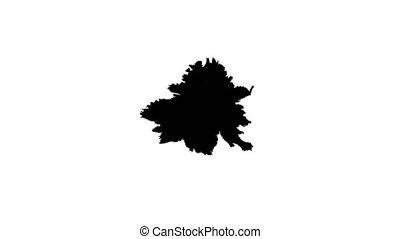 Ink drops on wet paper 22 - Black inks drop on wet paper....