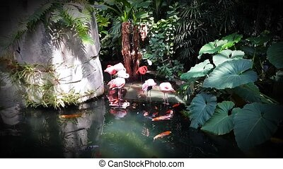 Pink Flamingo and Koi Carp - Beautiful Pink Flamingo...