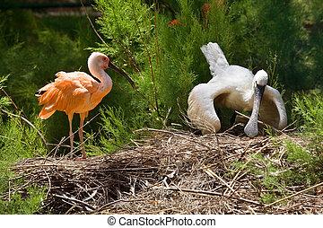two ibis bird