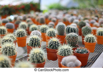 Small cactuses in brown pots - Rows of small cactuses in...
