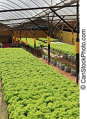 légume, ferme, culture, organique,  hydroponic