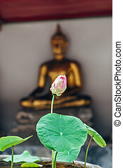 Lotus flower in Thailand monastery with buddah statue...
