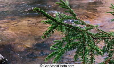 Movement of the river against the background of the spruce...