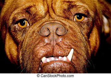 Ugly dog face - Face of a ugly dog with long teeth