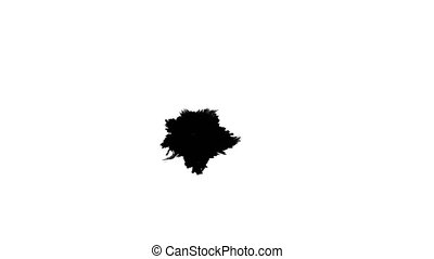Several ink drops on the wet paper 04 - Black inks drops on...