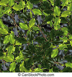 Holly leaves - picture, holly leaves evergreen plant