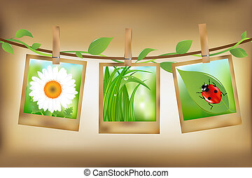 Photos With Nature Image - 3 Photos With Image of Ladybird,...